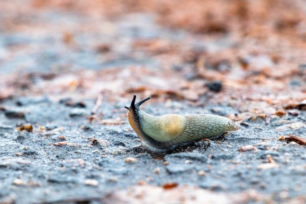 What is a slug in WordPress?